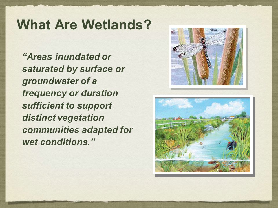"What Are Wetlands? ""Areas inundated or saturated by surface or groundwater of a frequency or duration sufficient to support distinct vegetation commun"