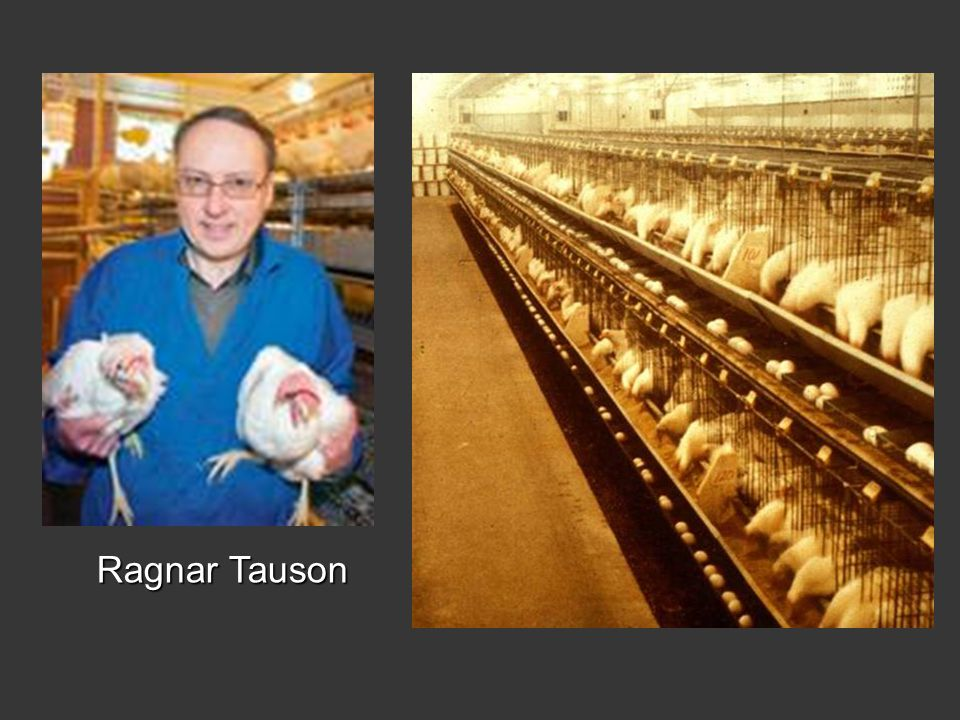 Ragnar Tauson