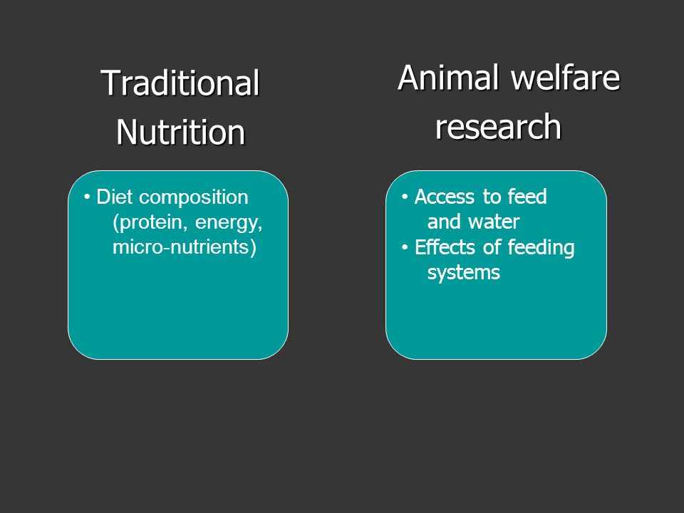 TraditionalNutrition Animal welfare Animal welfareresearch Diet composition (protein, energy, micro-nutrients) Access to feed and water Effects of feeding systems