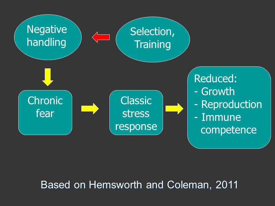 Based on Hemsworth and Coleman, 2011 Negative handling Chronic fear Reduced: - Growth - Reproduction - Immune competence Classic stress response Selection, Training