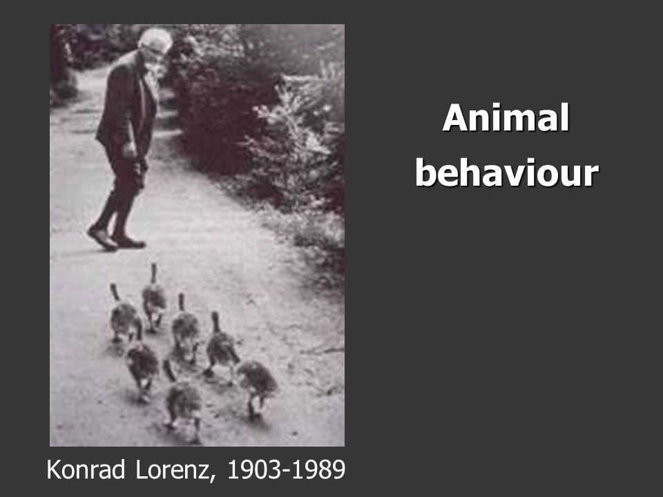 Animal behaviour Konrad Lorenz, 1903-1989