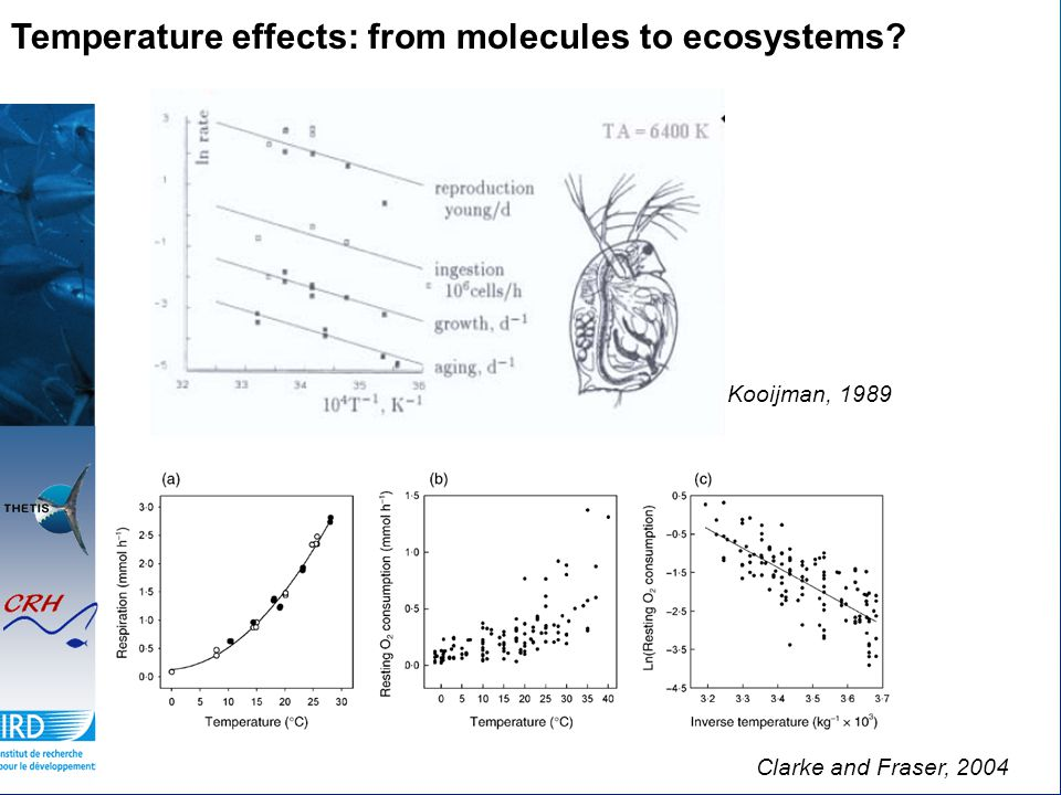Temperature effects: from molecules to ecosystems? Kooijman, 1989 Clarke and Fraser, 2004