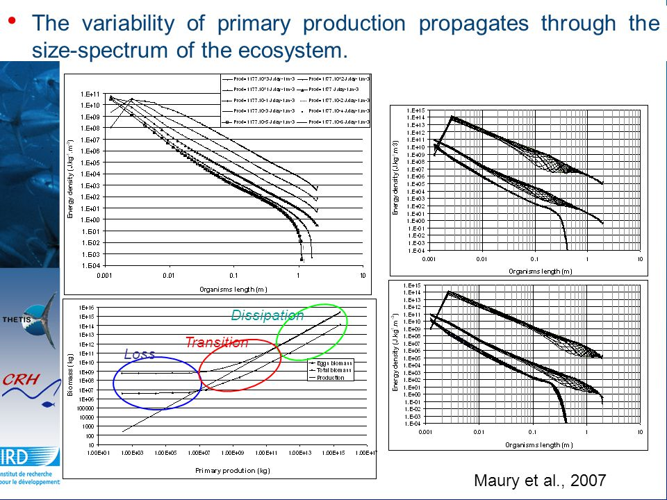 The variability of primary production propagates through the size-spectrum of the ecosystem.