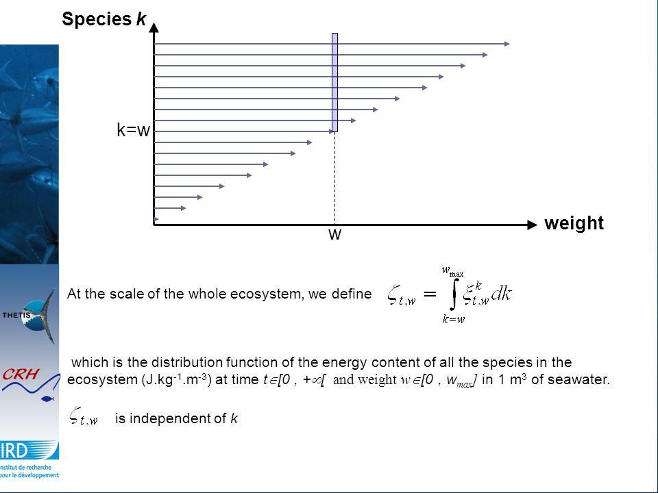 At the scale of the whole ecosystem, we define which is the distribution function of the energy content of all the species in the ecosystem (J.kg -1.m -3 ) at time t  [0, +  [ and weight w  [0, w max ] in 1 m 3 of seawater.