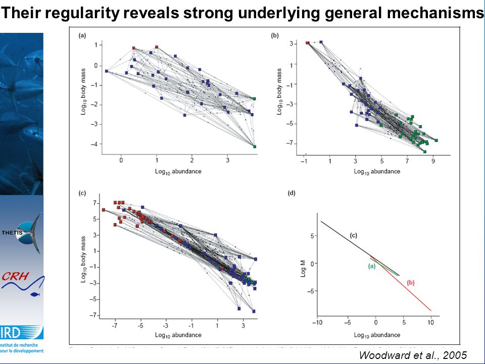 Woodward et al., 2005 Their regularity reveals strong underlying general mechanisms