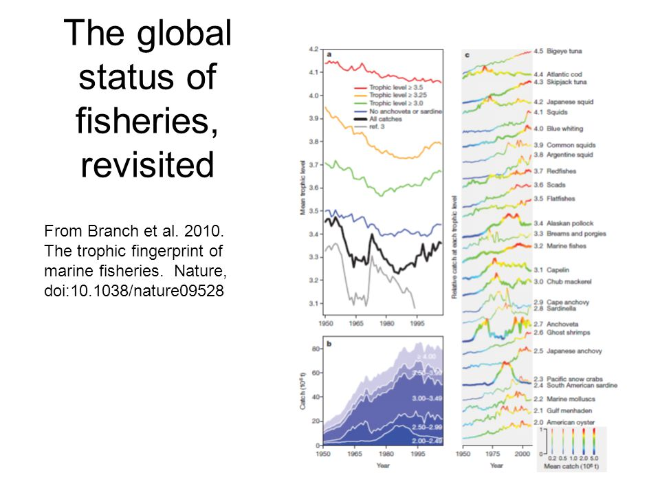 The global status of fisheries, revisited From Branch et al. 2010. The trophic fingerprint of marine fisheries. Nature, doi:10.1038/nature09528