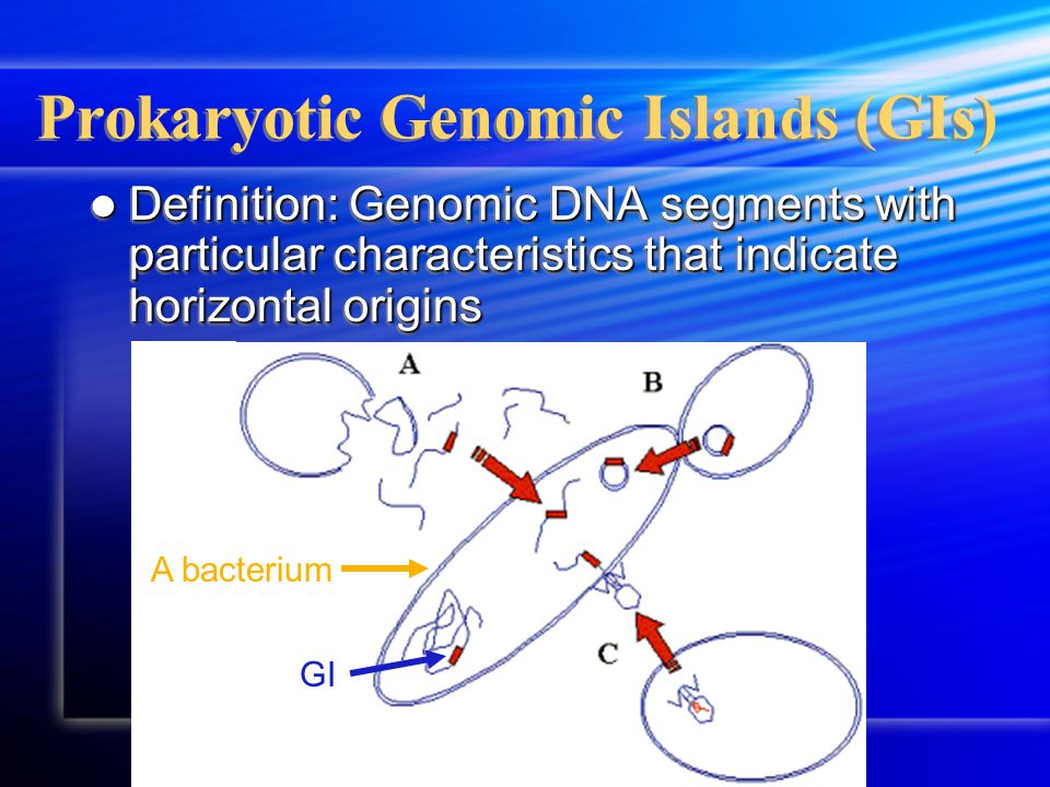 Prokaryotic Genomic Islands (GIs) Definition: Genomic DNA segments with particular characteristics that indicate horizontal origins Definition: Genomic DNA segments with particular characteristics that indicate horizontal origins GI A bacterium