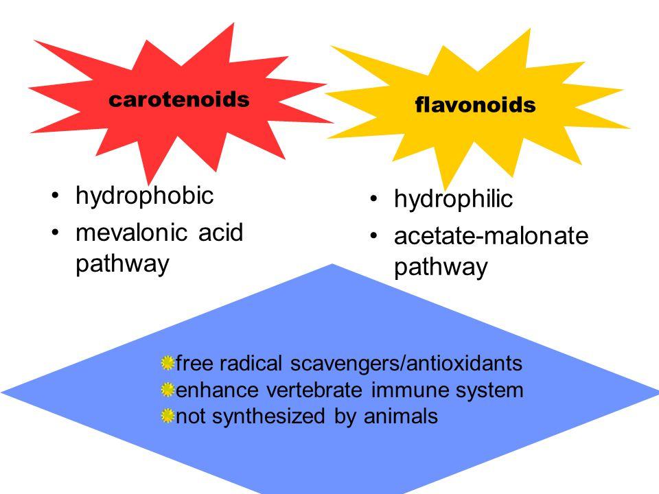 hydrophobic mevalonic acid pathway hydrophilic acetate-malonate pathway carotenoids flavonoids free radical scavengers/antioxidants enhance vertebrate immune system not synthesized by animals