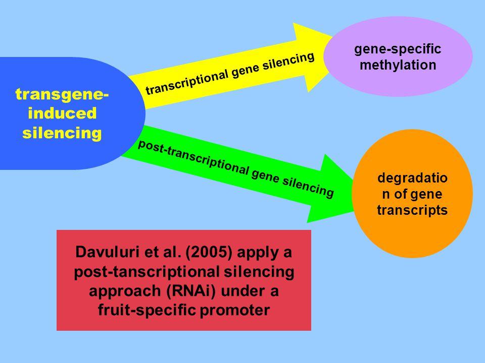 post-transcriptional gene silencing transcriptional gene silencing transgene- induced silencing gene-specific methylation degradatio n of gene transcripts Davuluri et al.