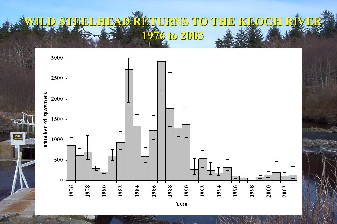 WILD STEELHEAD RETURNS TO THE KEOGH RIVER 1976 to 2003