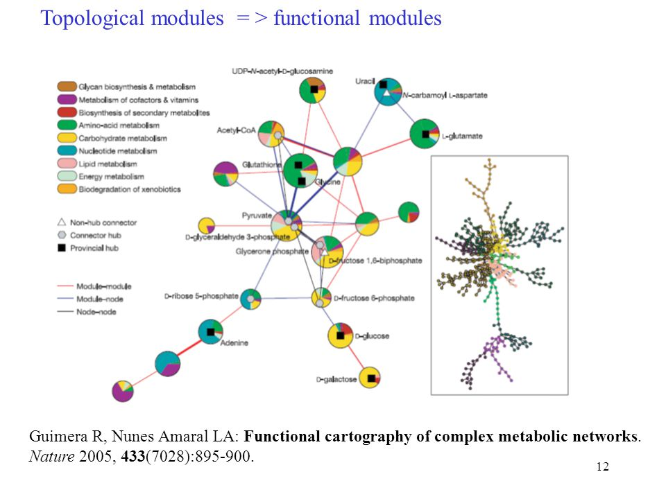 12 Topological modules = > functional modules Guimera R, Nunes Amaral LA: Functional cartography of complex metabolic networks.