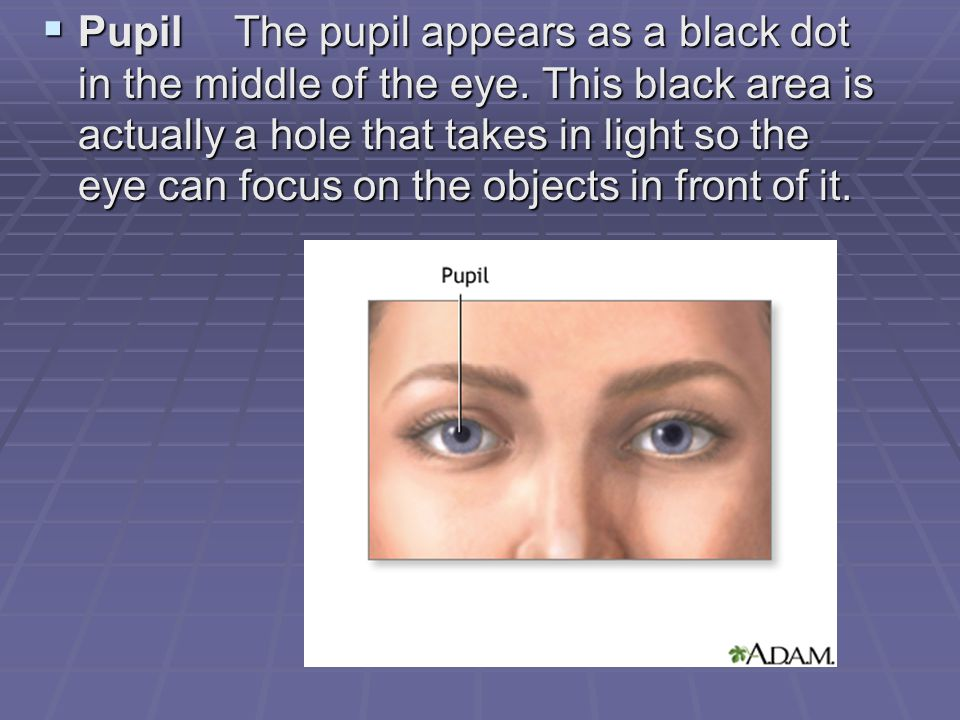  PupilThe pupil appears as a black dot in the middle of the eye. This black area is actually a hole that takes in light so the eye can focus on the o