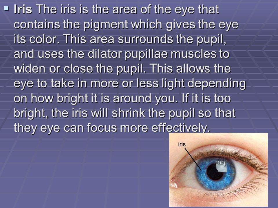  Iris The iris is the area of the eye that contains the pigment which gives the eye its color.