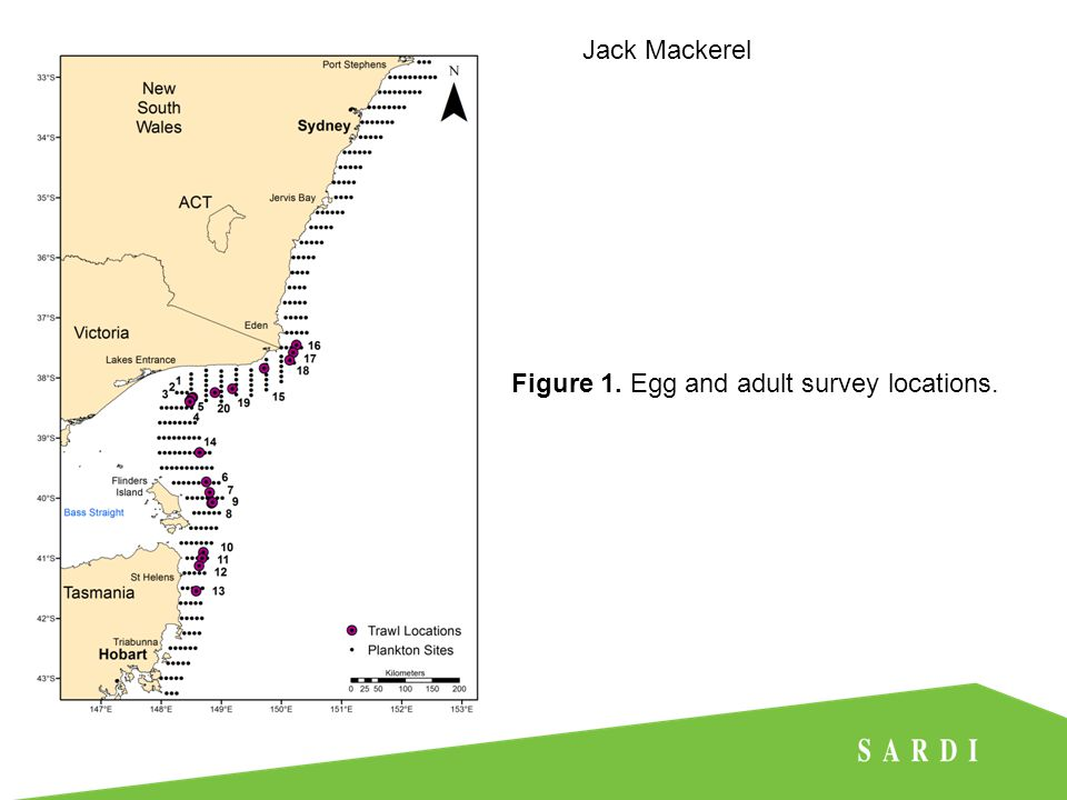 Jack Mackerel Figure 1. Egg and adult survey locations.