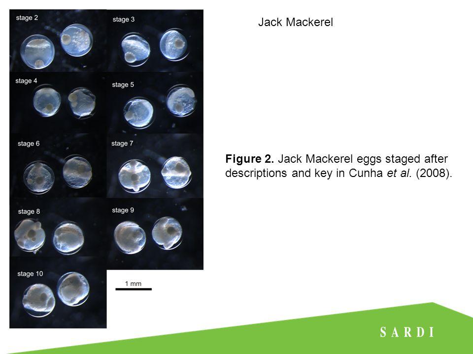 Jack Mackerel Figure 3. Voronoi natural neighbour polygons used to estimate spawning area.