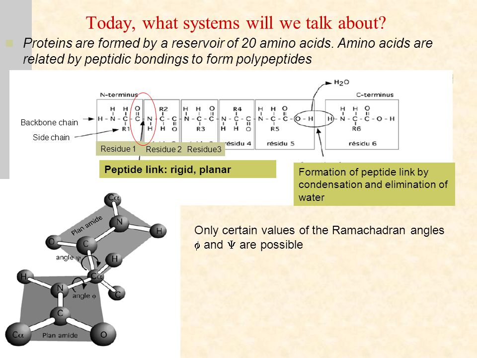 Today, what systems will we talk about. Proteins are formed by a reservoir of 20 amino acids.