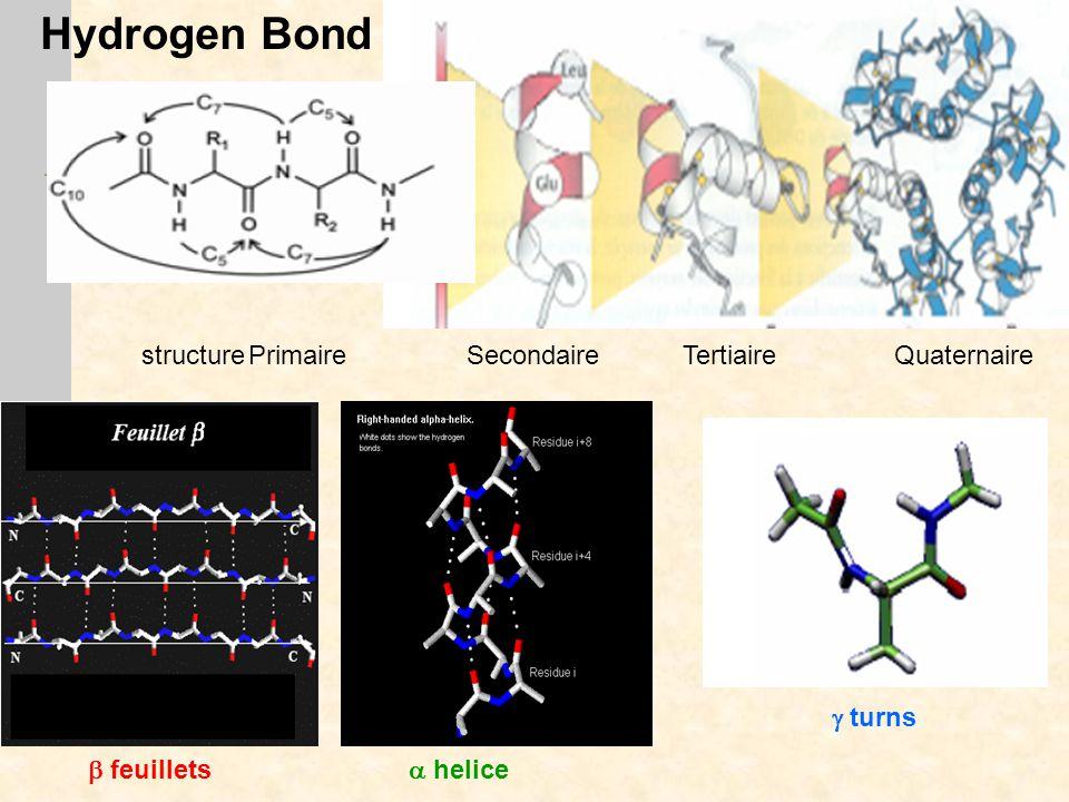  feuillets  helice structurePrimaire Secondaire Tertiaire Quaternaire Hydrogen Bond  turns