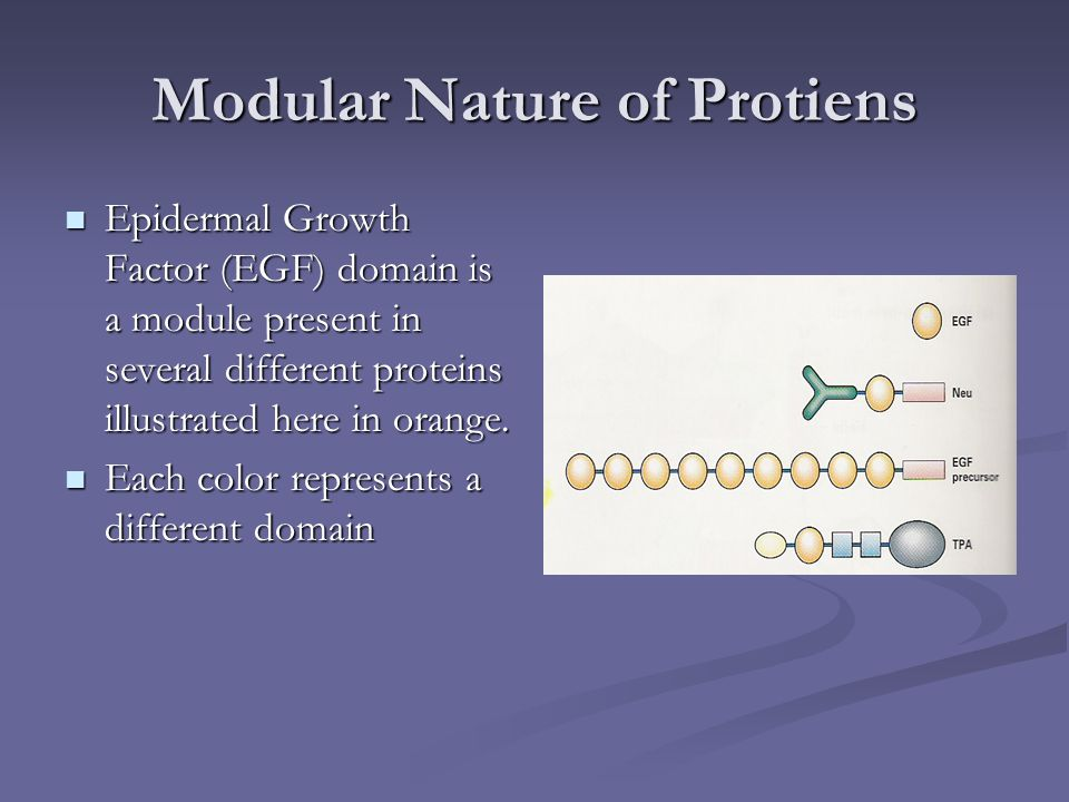 Modular Nature of Protiens Epidermal Growth Factor (EGF) domain is a module present in several different proteins illustrated here in orange. Epiderma