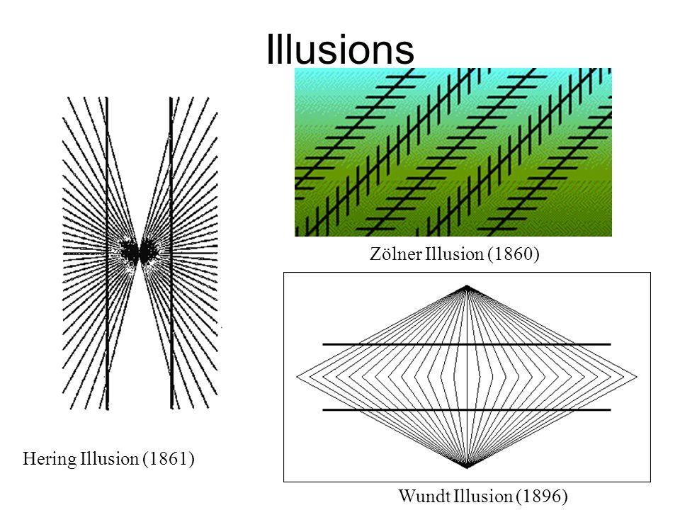 Illusions Hering Illusion (1861) Wundt Illusion (1896) Zölner Illusion (1860)