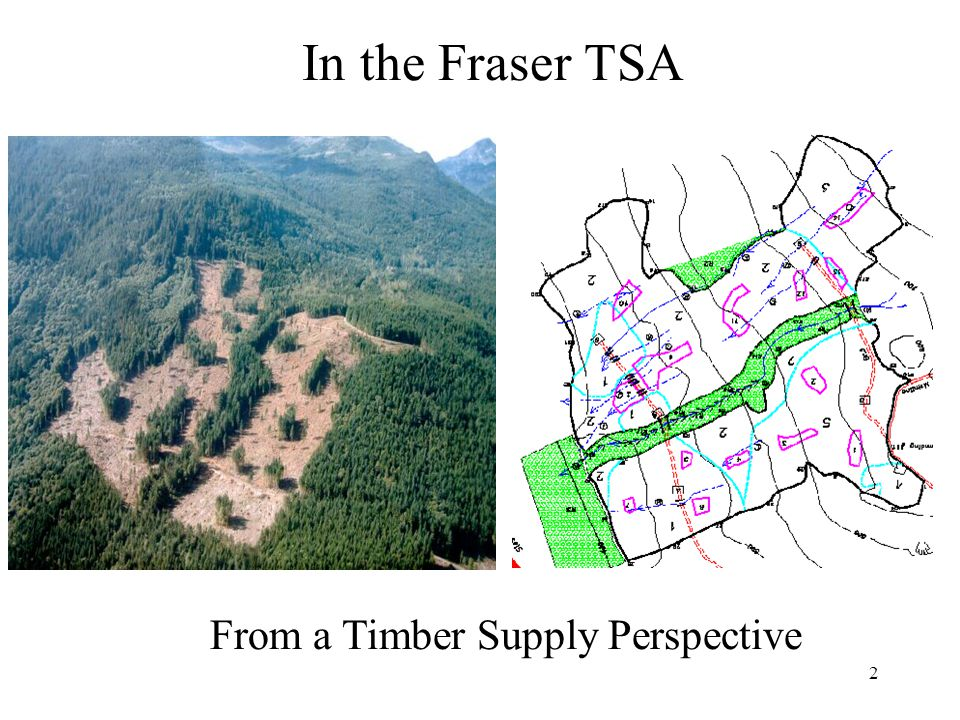 2 In the Fraser TSA From a Timber Supply Perspective