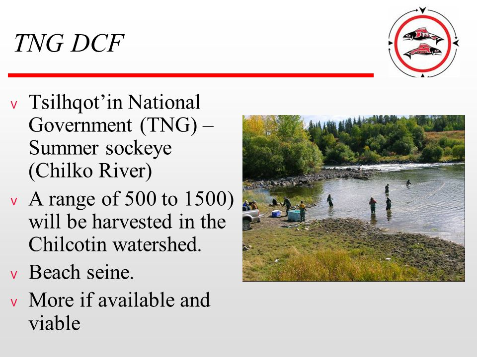 TNG DCF v Tsilhqot'in National Government (TNG) – Summer sockeye (Chilko River) v A range of 500 to 1500) will be harvested in the Chilcotin watershed