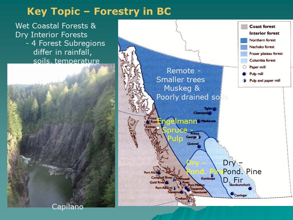 Capilano Key Topic – Forestry in BC Wet Coastal Forests & Dry Interior Forests - 4 Forest Subregions differ in rainfall, soils, temperature Dry – Pond.