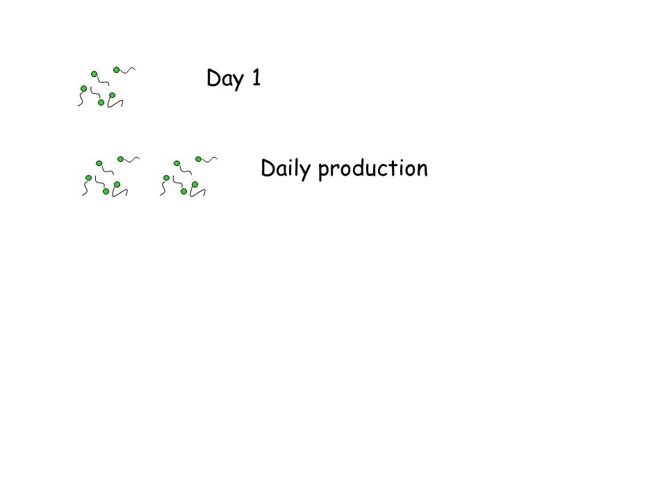 Day 1 Daily production