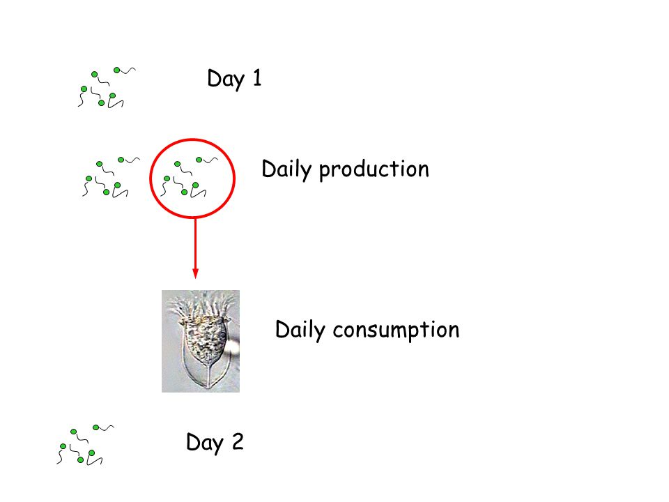 Day 1 Daily production Daily consumption Day 2