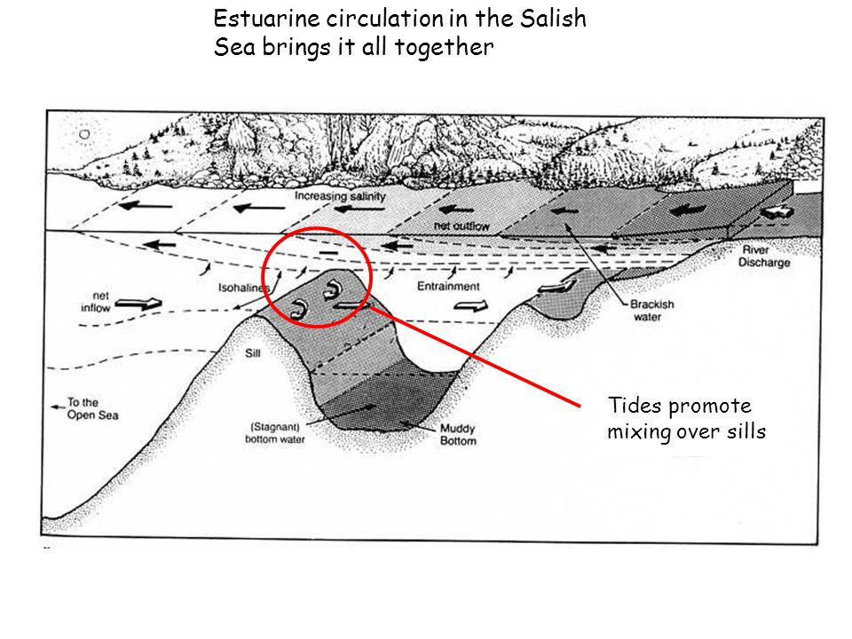 Estuarine circulation in the Salish Sea brings it all together Tides promote mixing over sills
