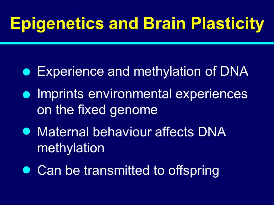 04-144 Epigenetics and Brain Plasticity Experience and methylation of DNA Imprints environmental experiences on the fixed genome Maternal behaviour affects DNA methylation Can be transmitted to offspring