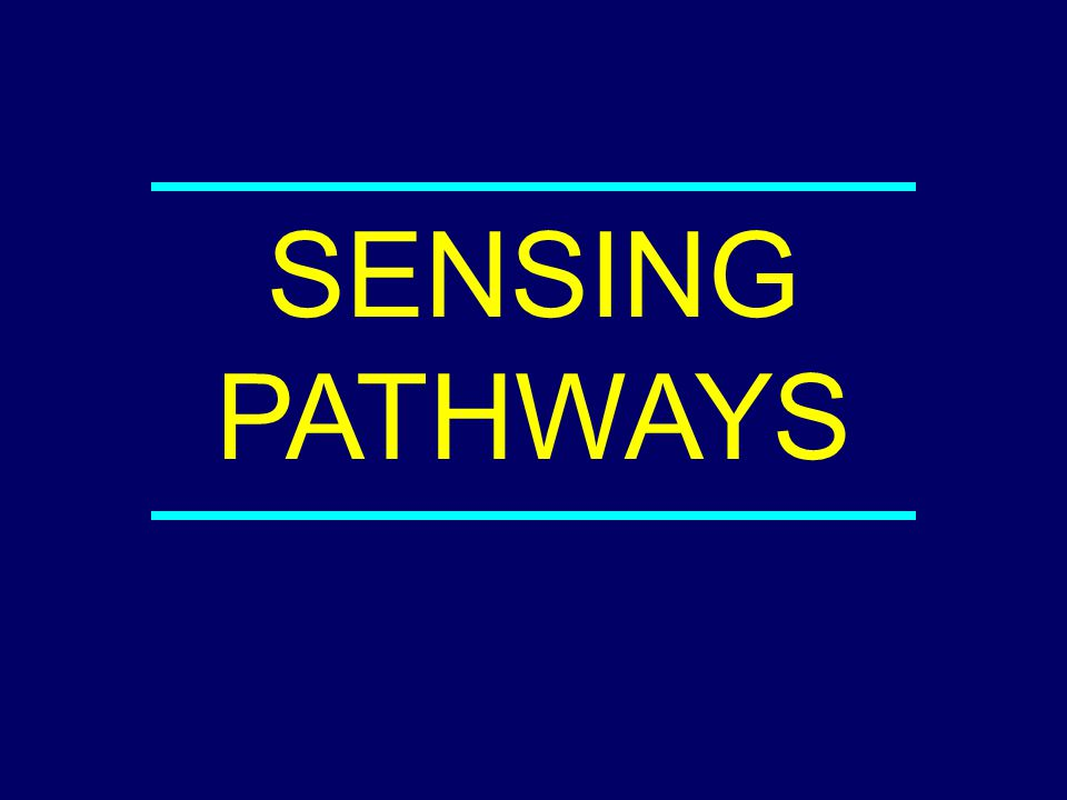 SENSING PATHWAYS 04-042