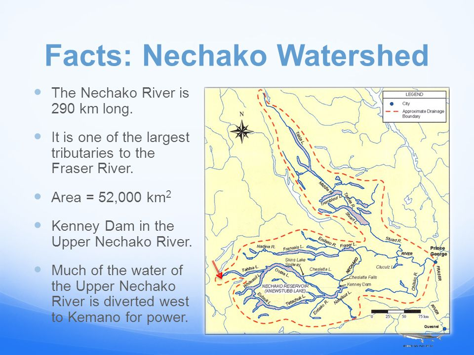 Facts: Nechako Watershed The Nechako River is 290 km long.