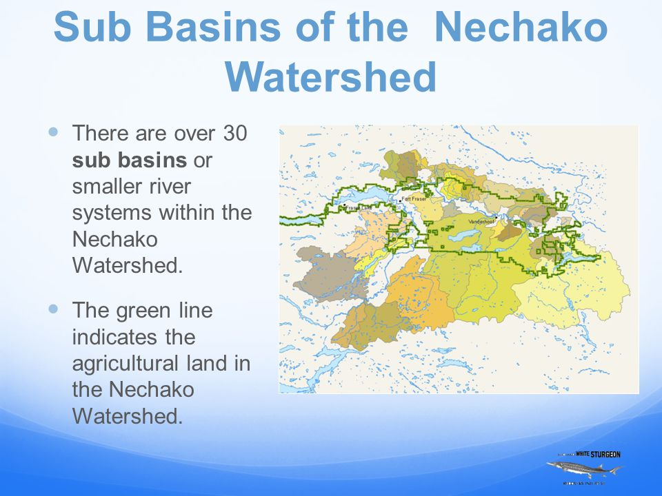 Sub Basins of the Nechako Watershed There are over 30 sub basins or smaller river systems within the Nechako Watershed.