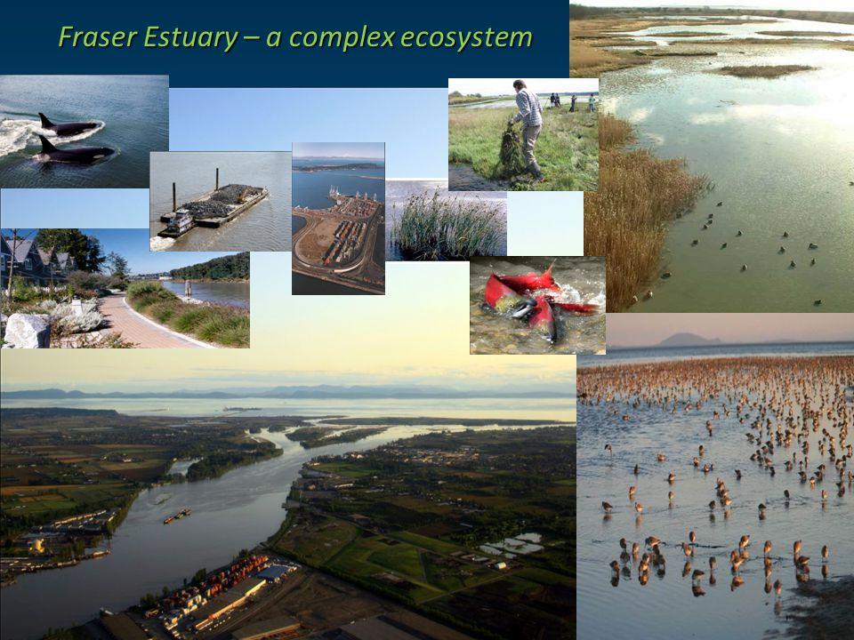 Fraser Estuary – a complex ecosystem Fraser Estuary – a complex ecosystem