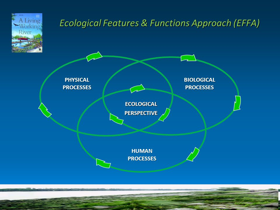 Ecological Features & Functions Approach (EFFA) Ecological Features & Functions Approach (EFFA) ECOLOGICAL PERSPECTIVE PERSPECTIVE PHYSICALPROCESSESBIOLOGICALPROCESSES HUMANPROCESSES