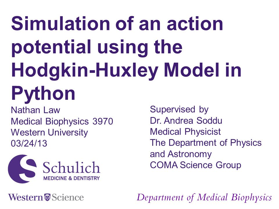 Simulation of an action potential using the Hodgkin-Huxley Model in Python Nathan Law Medical Biophysics 3970 Western University 03/24/13 Supervised b