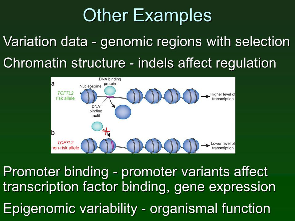 Other Examples Variation data - genomic regions with selection Chromatin structure - indels affect regulation Promoter binding - promoter variants affect transcription factor binding, gene expression Epigenomic variability - organismal function
