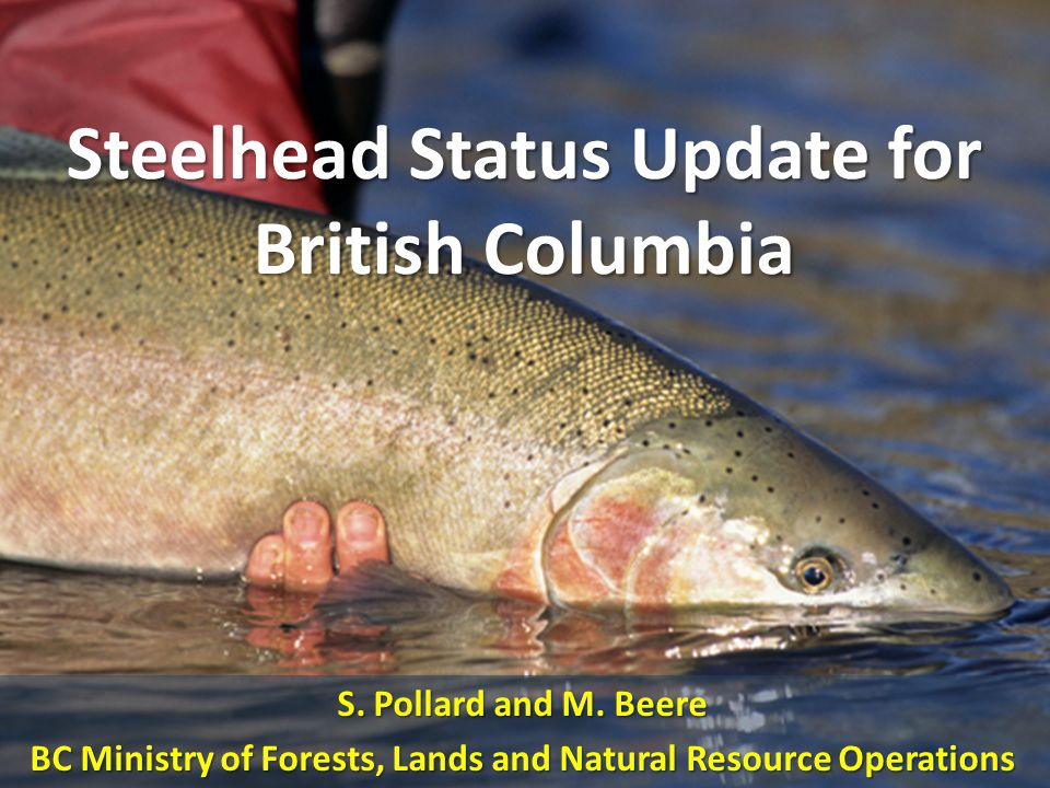 Steelhead Status Update for British Columbia S. Pollard and M.