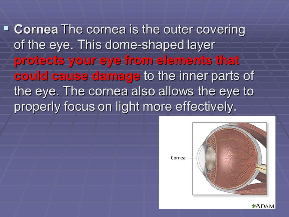  CorneaThe cornea is the outer covering of the eye.