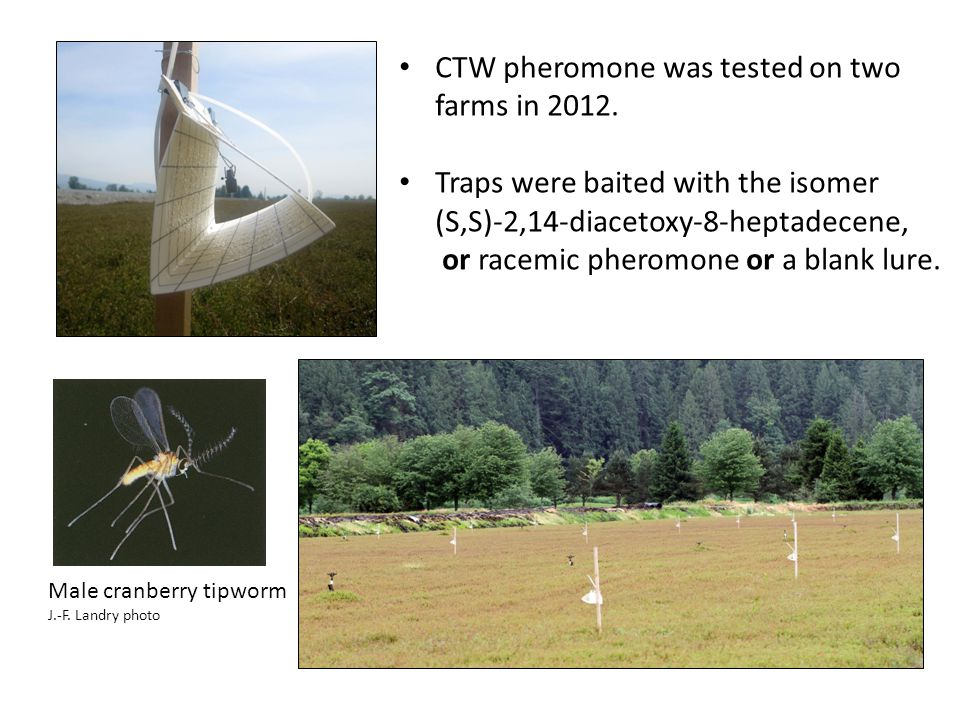 CTW pheromone was tested on two farms in 2012. Traps were baited with the isomer (S,S)-2,14-diacetoxy-8-heptadecene, or racemic pheromone or a blank l