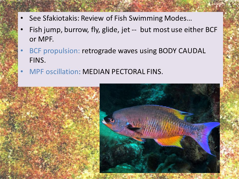 See Sfakiotakis: Review of Fish Swimming Modes… Fish jump, burrow, fly, glide, jet -- but most use either BCF or MPF.