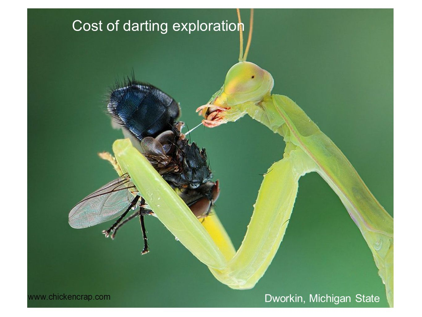 www.chickencrap.com Cost of darting exploration Dworkin, Michigan State