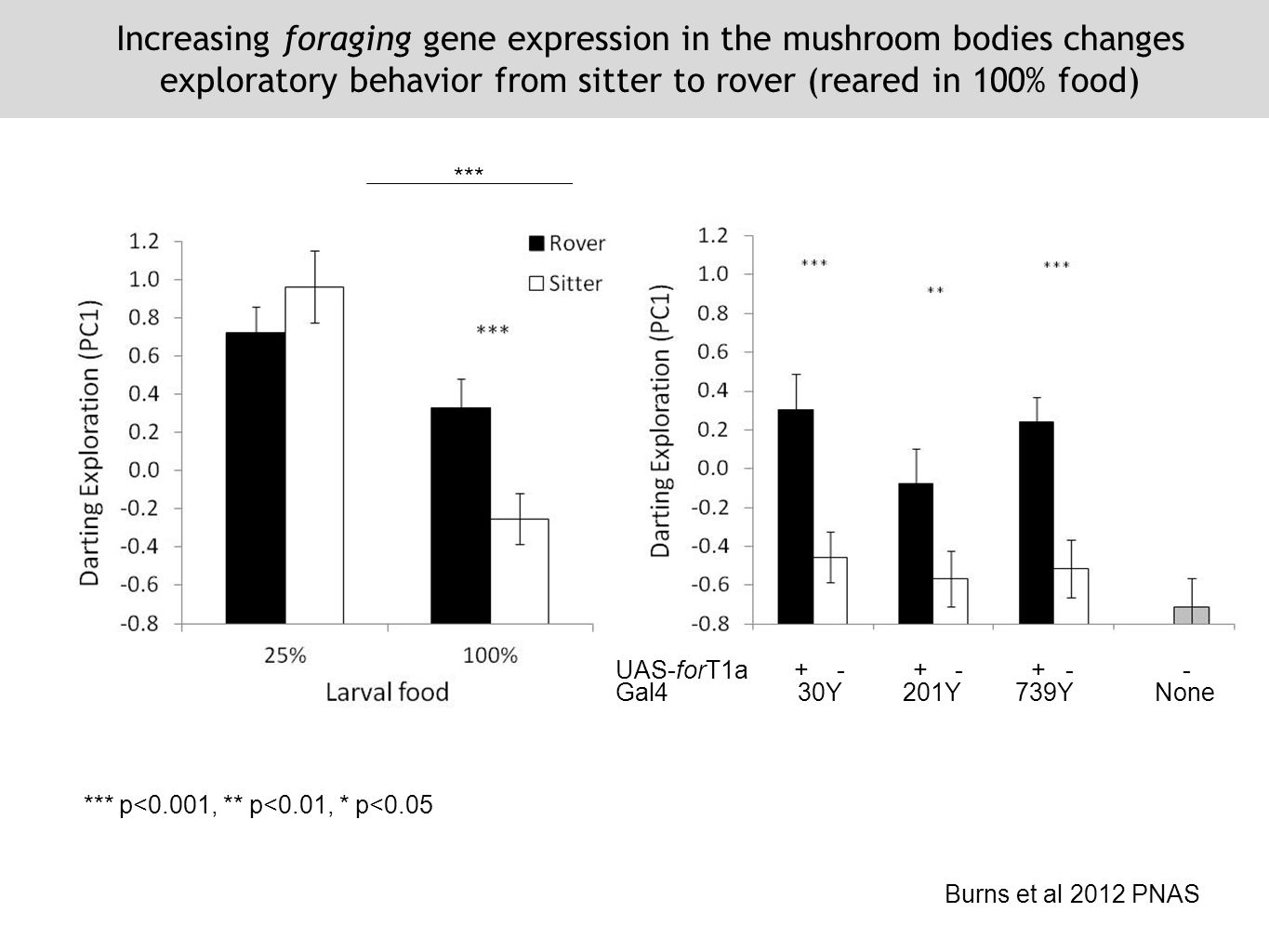 *** *** p<0.001, ** p<0.01, * p<0.05 Increasing foraging gene expression in the mushroom bodies changes exploratory behavior from sitter to rover (reared in 100% food) Burns et al 2012 PNAS UAS-forT1a + - + - + - - Gal4 30Y 201Y 739Y None