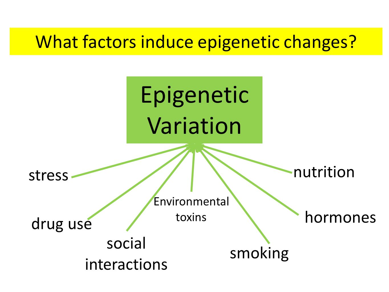 Epigenetic Variation nutrition stress drug use social interactions Environmental toxins hormones smoking What factors induce epigenetic changes