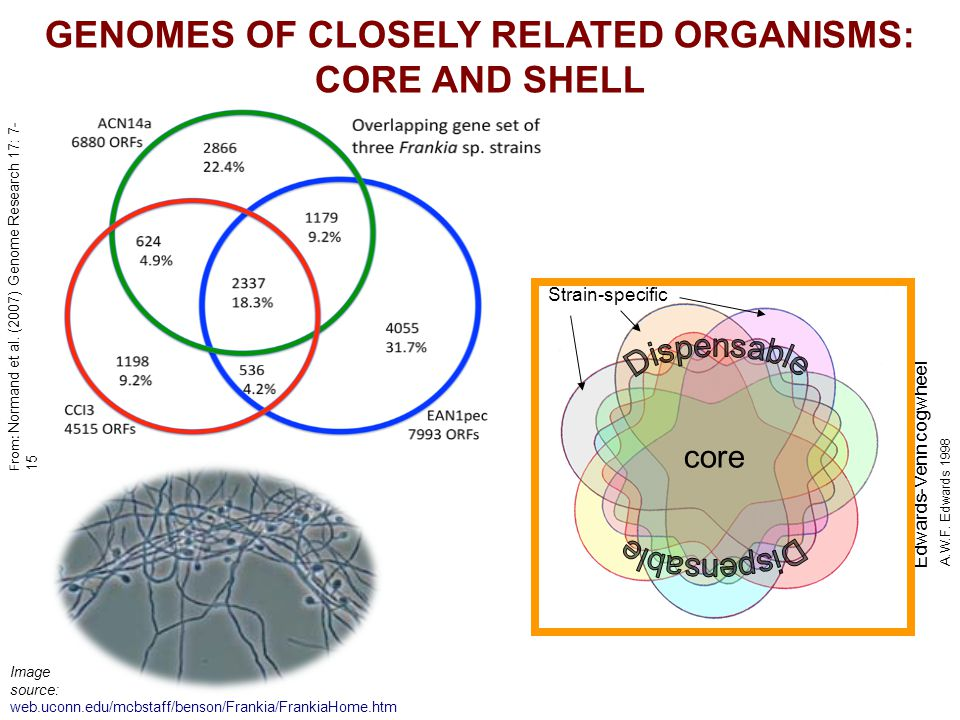 GENOMES OF CLOSELY RELATED ORGANISMS: CORE AND SHELL A.W.F.