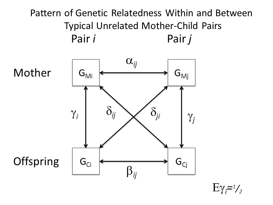 G Mi G Mj G Ci G Cj  ij  ij  ij  ji Mother Offspring Pair iPair j ii jj  i = 1 / 2 Pattern of Genetic Relatedness Within and Between Typical Unrelated Mother-Child Pairs