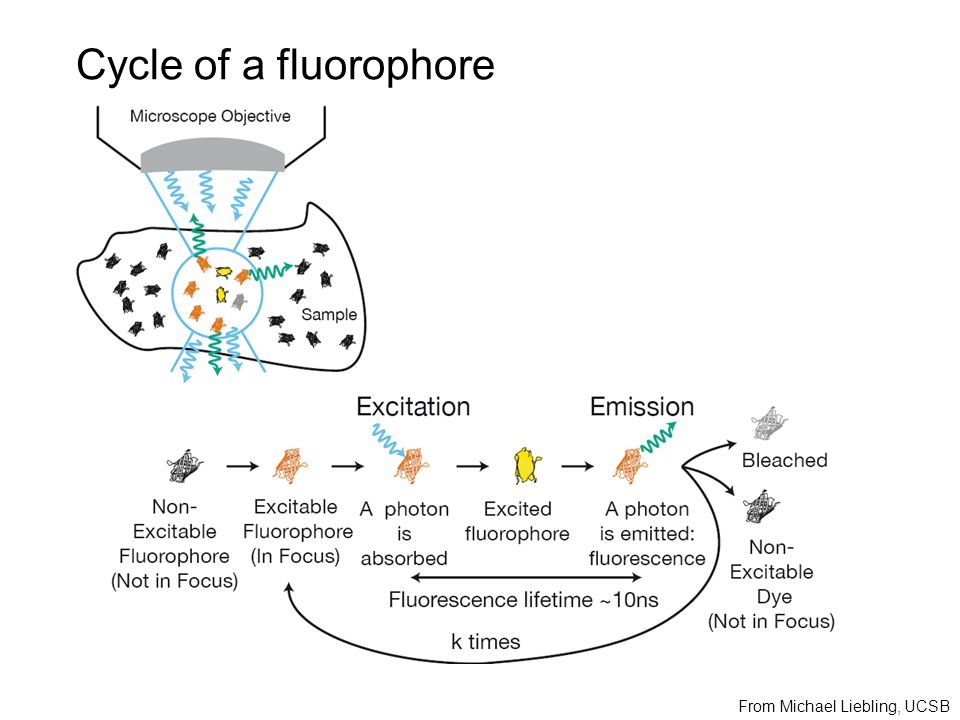 Cycle of a fluorophore From Michael Liebling, UCSB