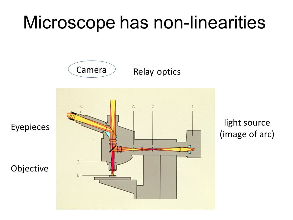 Microscope has non-linearities light source (image of arc) Relay optics Objective Eyepieces Camera