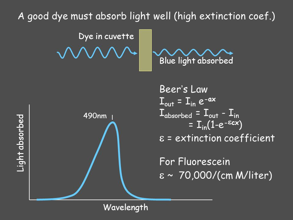 Fluorophore absorption Beer-Lambert law I out = I in exp (-  L c) I absorbed = I out - I in I in : incident light intensity (in W.cm -2 ) L: absorption path length (in cm) c: concentration of the absorber (in M or mol.L -1 )  : molar absorption coefficient (in M -1 cm -1 or mol -1.L.cm -1 ) Fluorescein  ~ 70,000 M -1.cm -1 eGFP  ~ 55,000 M -1.cm -1 Light absorbed Wavelength I in Blue light absorbed I out Green dye in cuvette L