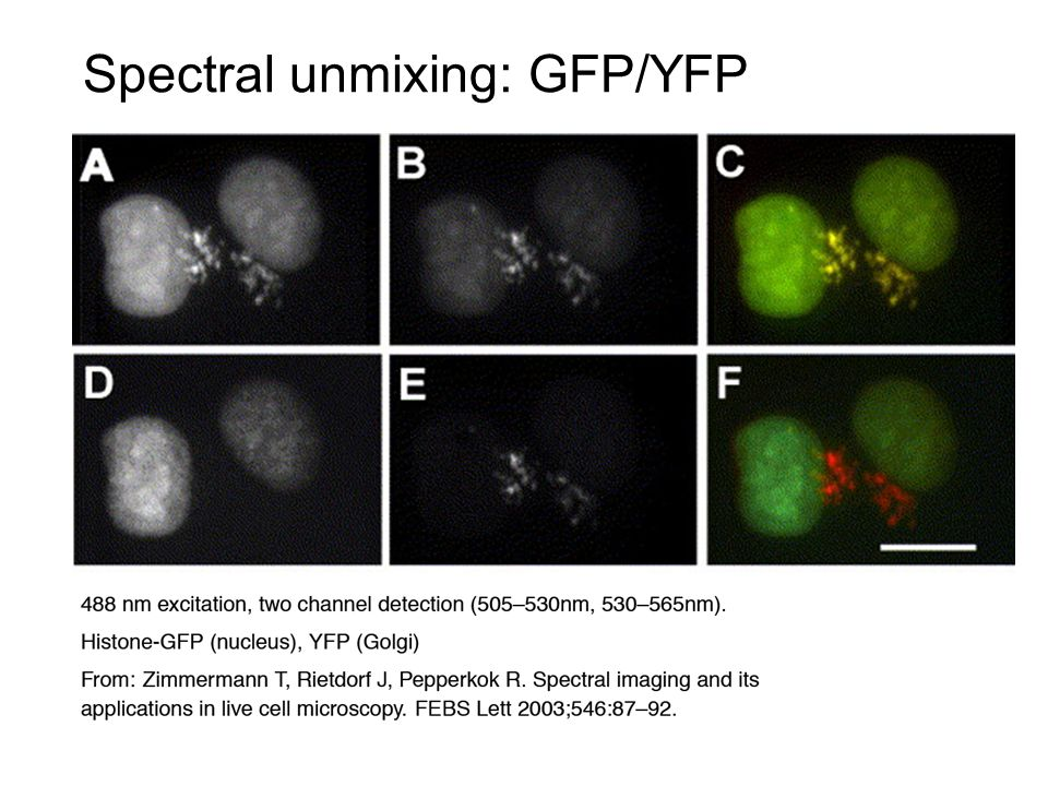 Spectral unmixing: GFP/YFP